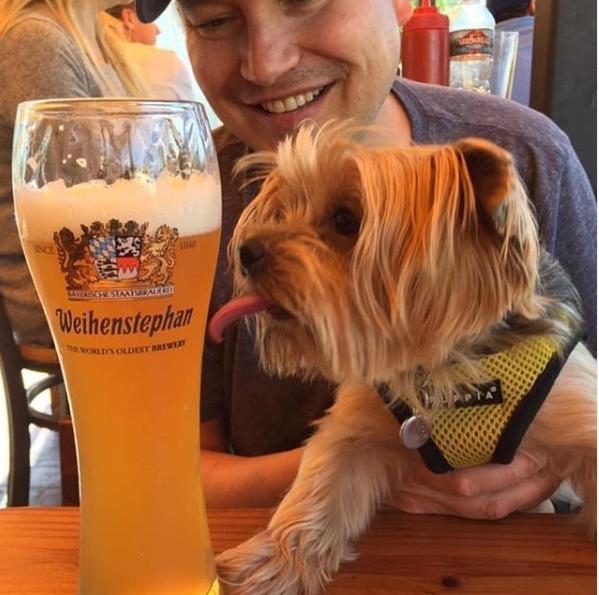 blue dog beer tavern dog friendly pub la
