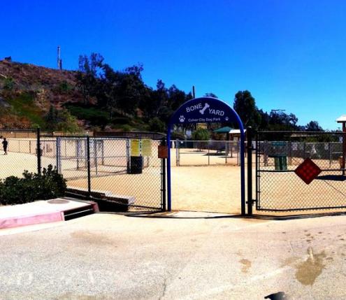 boneyard dog park