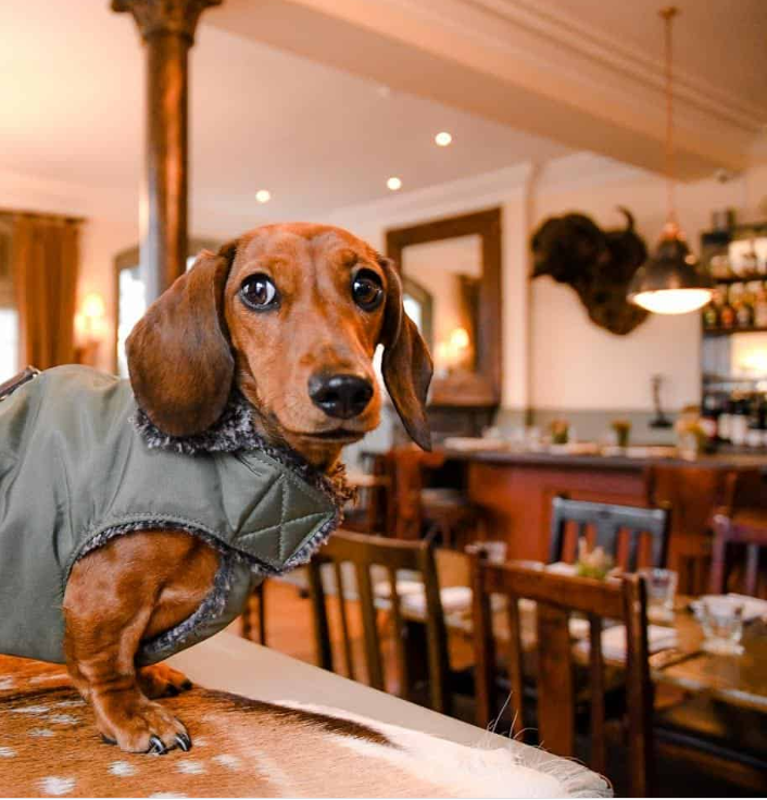 harwood arms pet friendly restaurant london