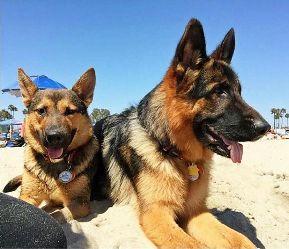 rosies dog beach la