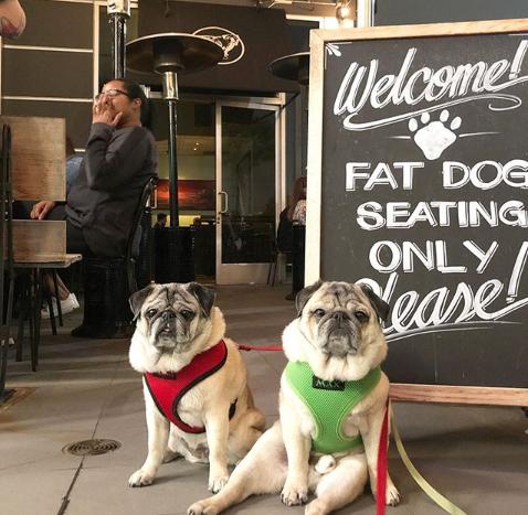the fat dog pet-friendly pub la
