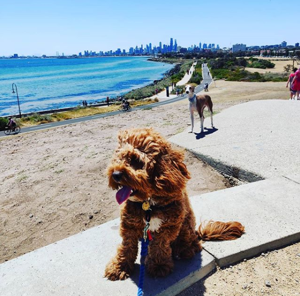Elwood Beach Dog Friendly