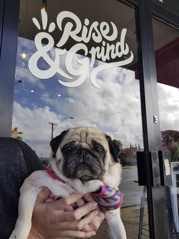 rise and grind pet friendly cafe perth