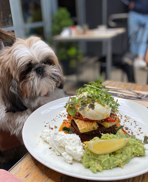 shanklin cafe pet friendly melbourne