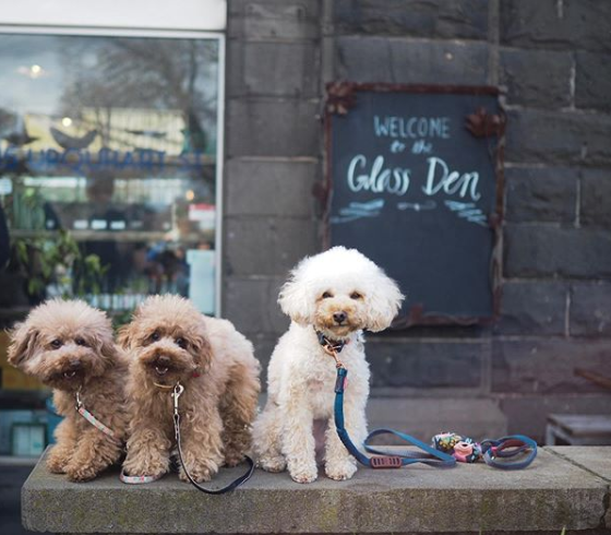 the glass den coburg pet friendly