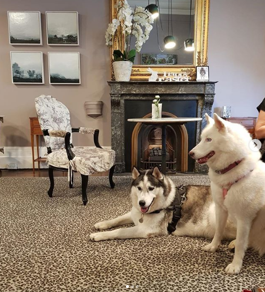 the hughenden boutique hotel pet friendly