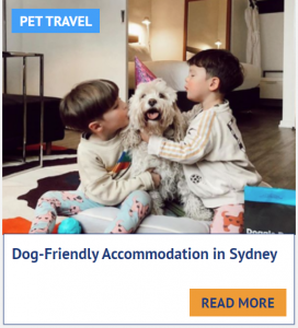 dog friendly hotels sydney