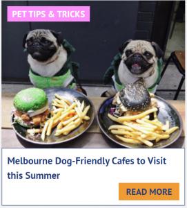dog friendly cafes in melbourne