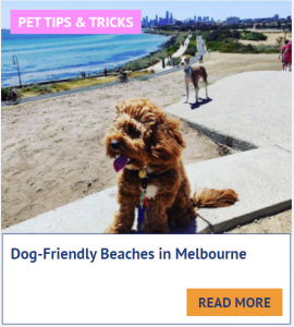 dog friendly beaches in melbourne